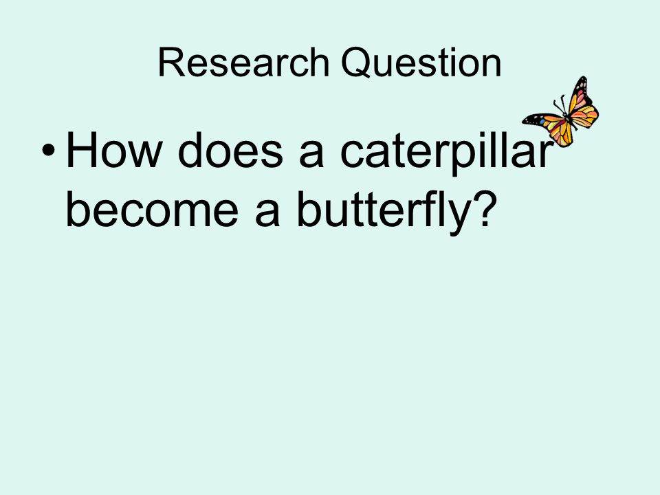 How does a caterpillar become a butterfly