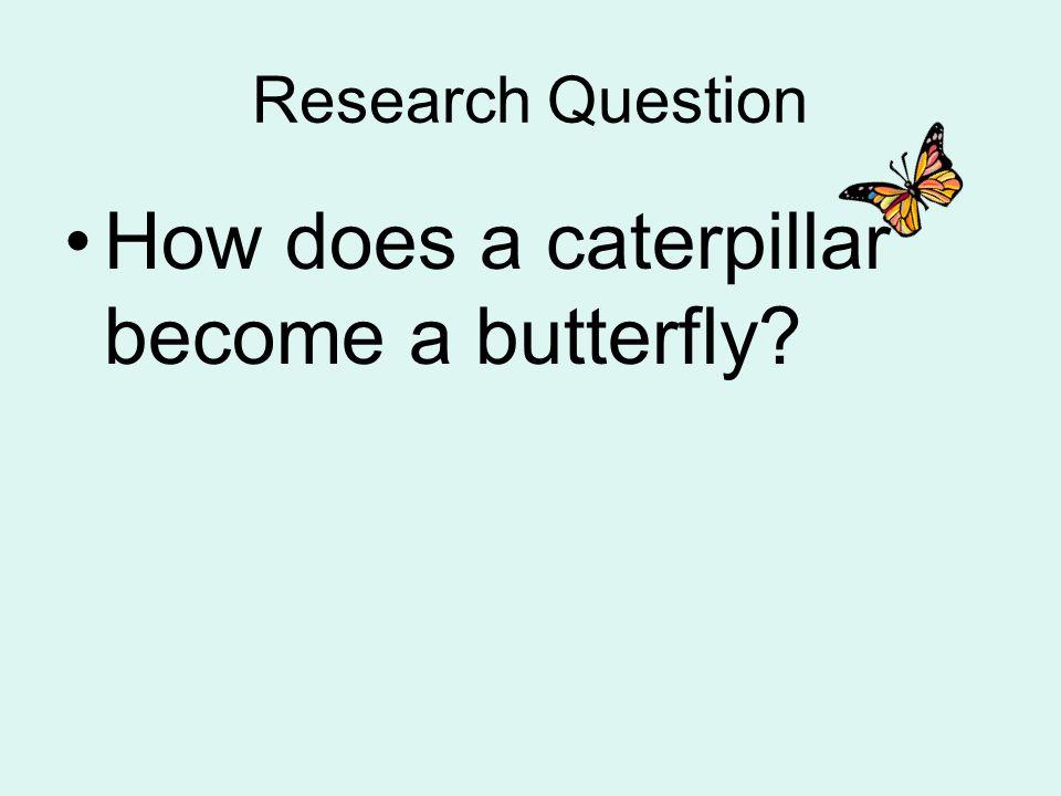 Caterpillar Become Butterfly