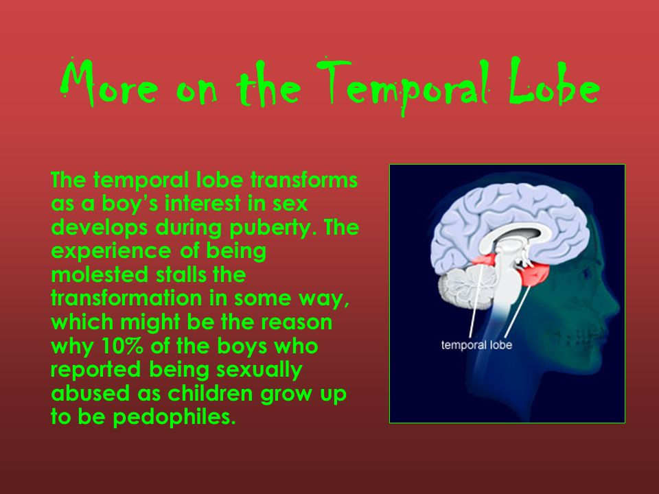 More on the Temporal Lobe
