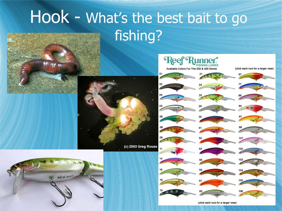 Hook - What's the best bait to go fishing
