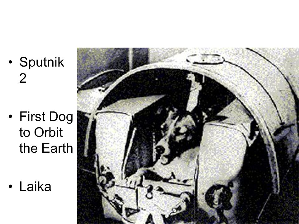 Sputnik 2 First Dog to Orbit the Earth Laika
