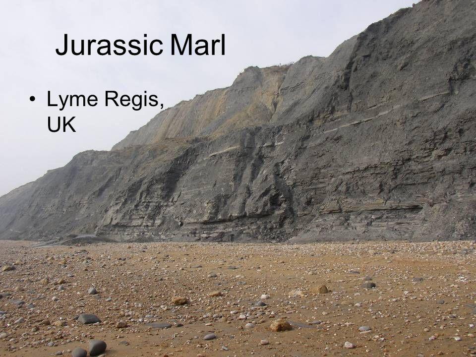 Jurassic Marl Lyme Regis, UK