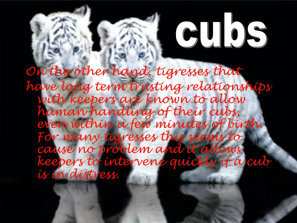 cubs On the other hand, tigresses that