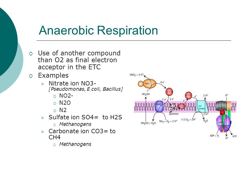 metabolism summary ppt video online download