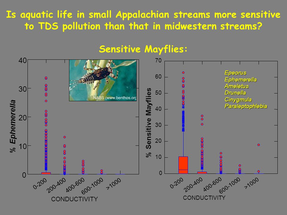 Is aquatic life in small Appalachian streams more sensitive to TDS pollution than that in midwestern streams