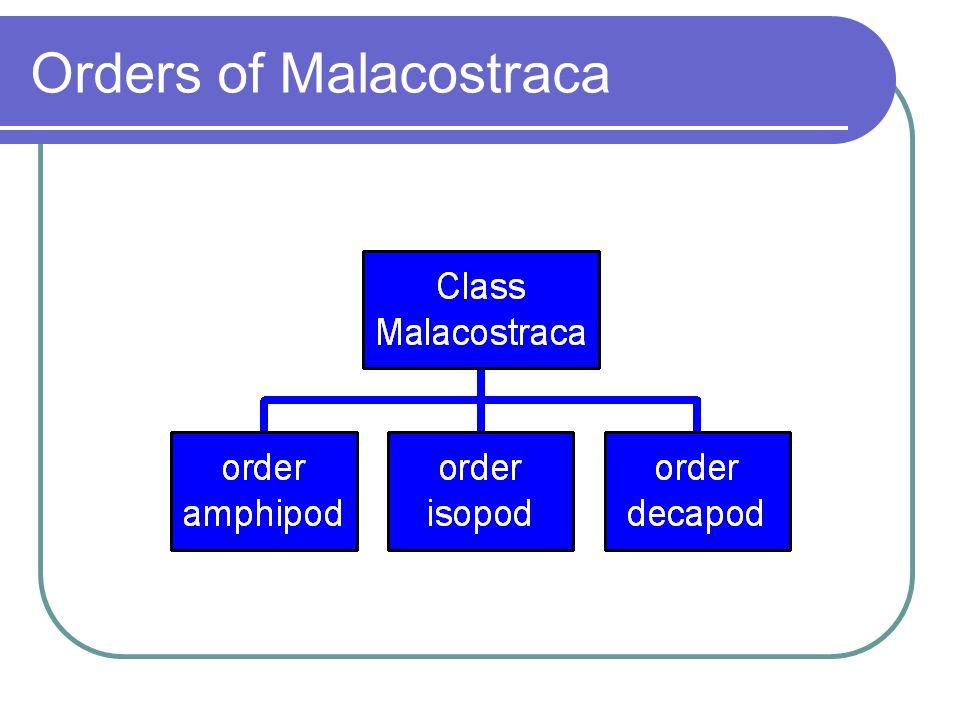 Orders of Malacostraca