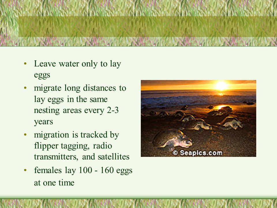 Leave water only to lay eggs