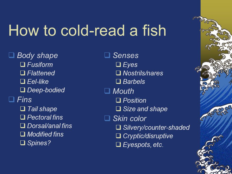 How to cold-read a fish Body shape Fins Senses Mouth Skin color