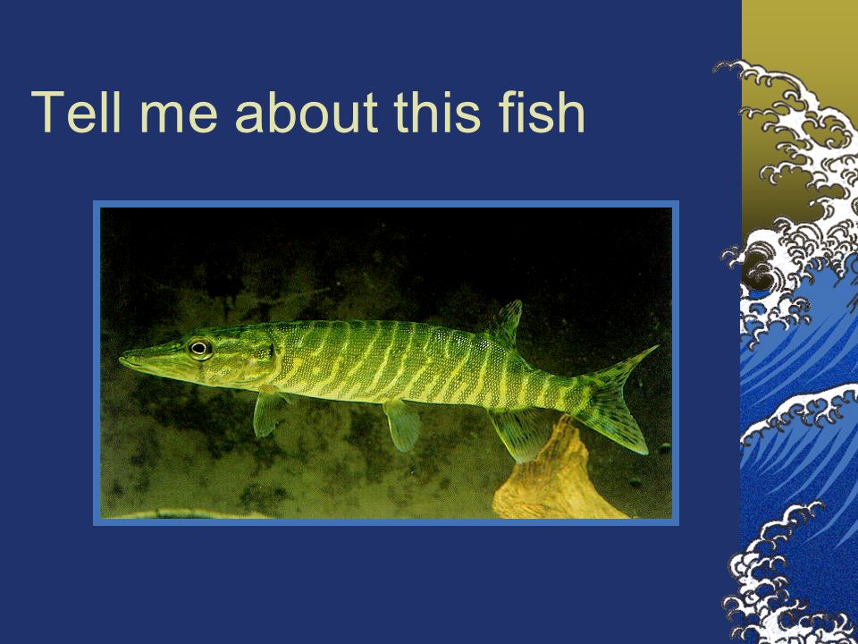 Tell me about this fish