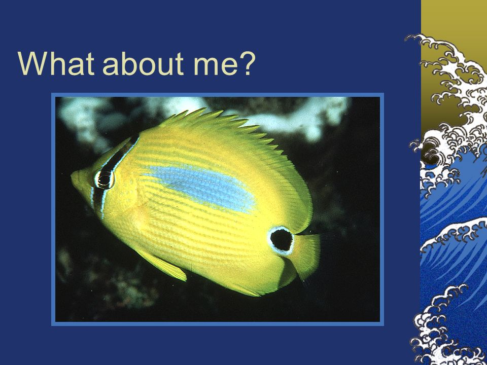 What about me Note: Deep-bodied, pectoral fins high on the body and transparent = very maneuverable.