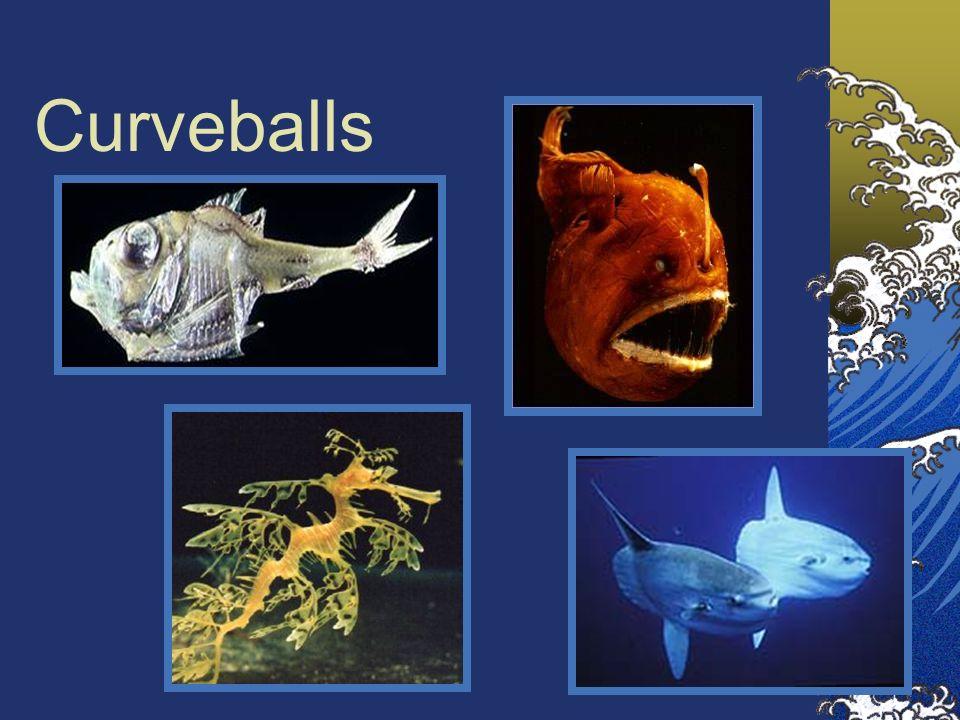 Curveballs Clockwise from upper right: deep sea anglerfish, ocean sunfish, leafy seadragon, hatchetfish.