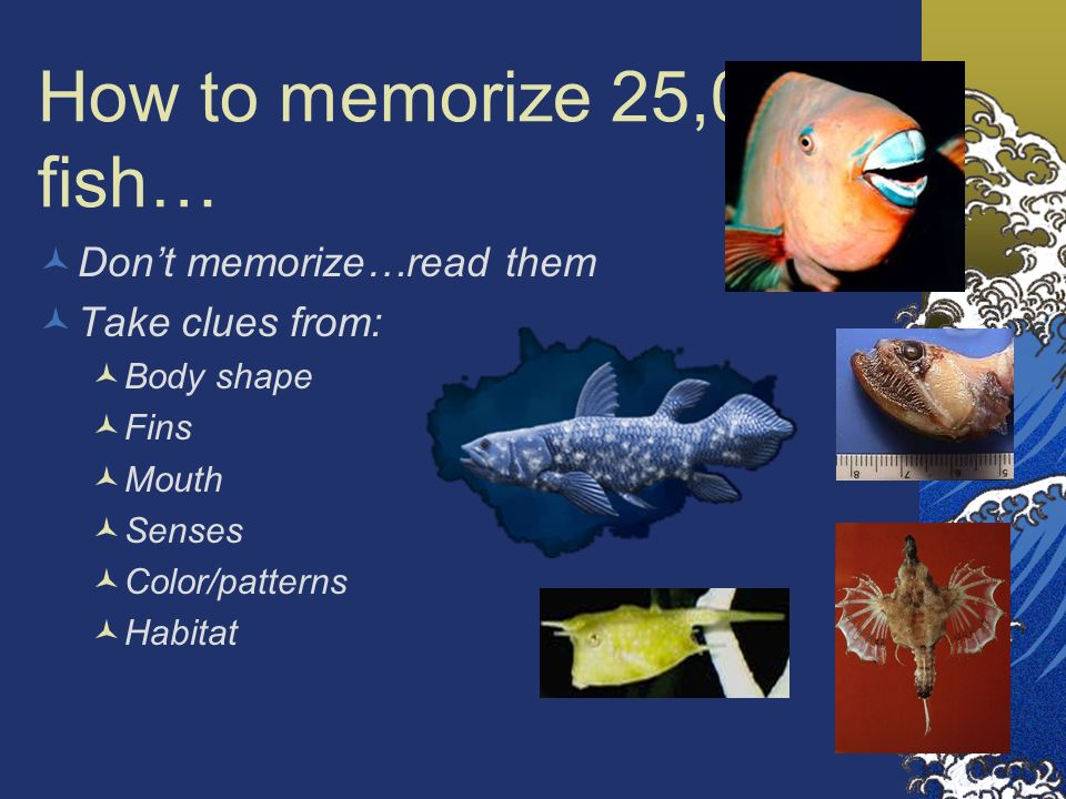 How to memorize 25,000 fish… Don't memorize…read them Take clues from:
