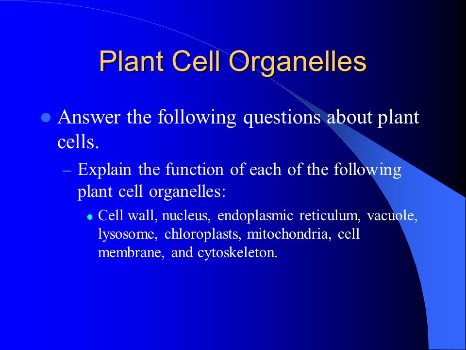 Plant Cell Organelles Answer the following questions about plant cells. Explain the function of each of the following plant cell organelles: