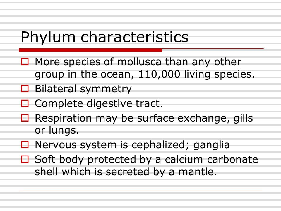 Phylum characteristics