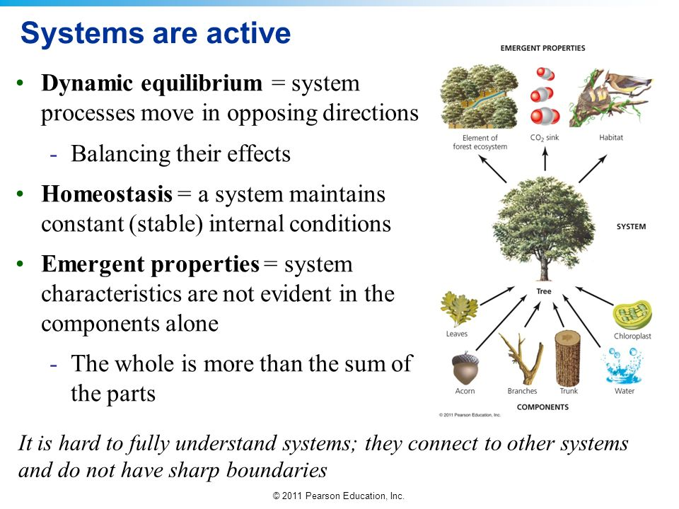 Systems are active Dynamic equilibrium = system processes move in opposing directions. Balancing their effects.