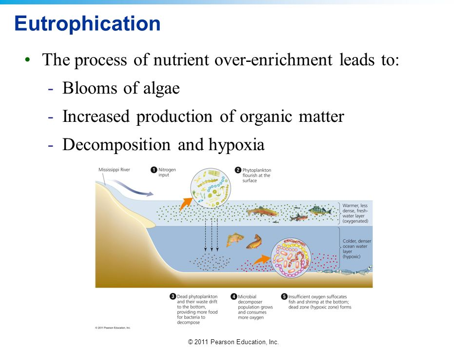 Eutrophication The process of nutrient over-enrichment leads to: