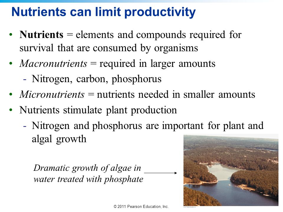 Nutrients can limit productivity