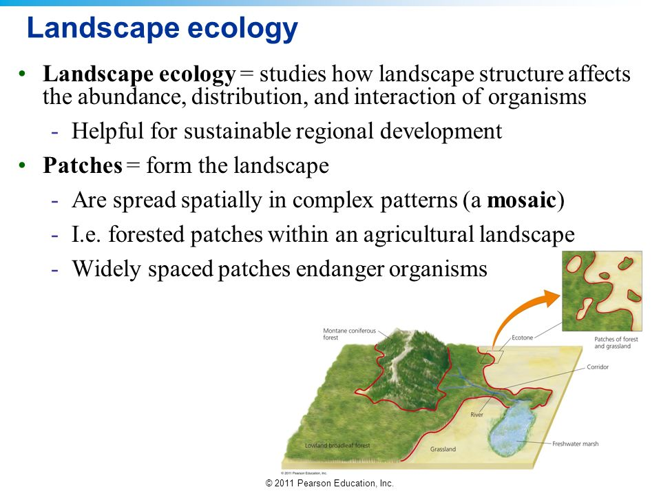 Landscape ecology Landscape ecology = studies how landscape structure affects the abundance, distribution, and interaction of organisms.