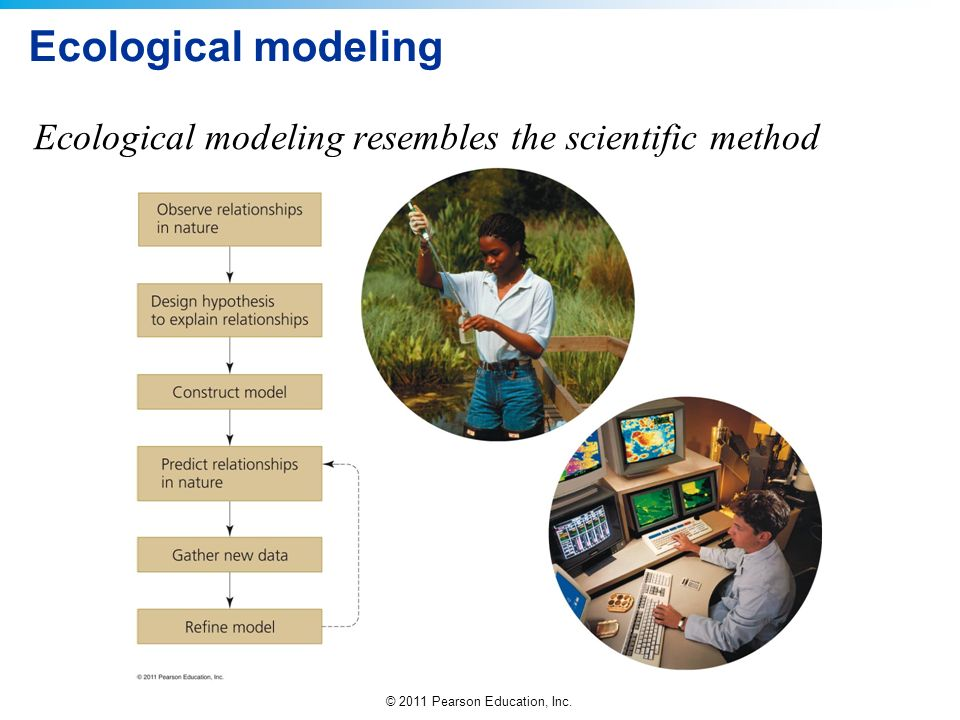 Ecological modeling Ecological modeling resembles the scientific method
