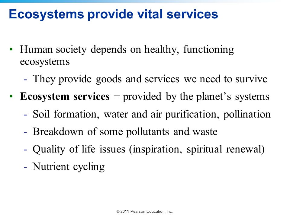 Ecosystems provide vital services