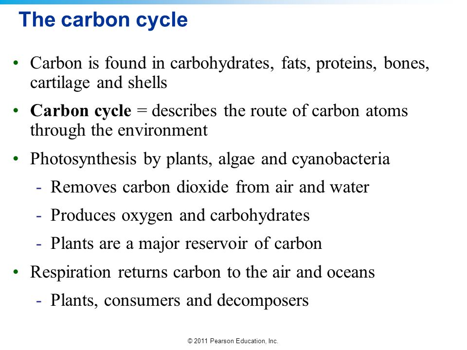 The carbon cycle Carbon is found in carbohydrates, fats, proteins, bones, cartilage and shells.