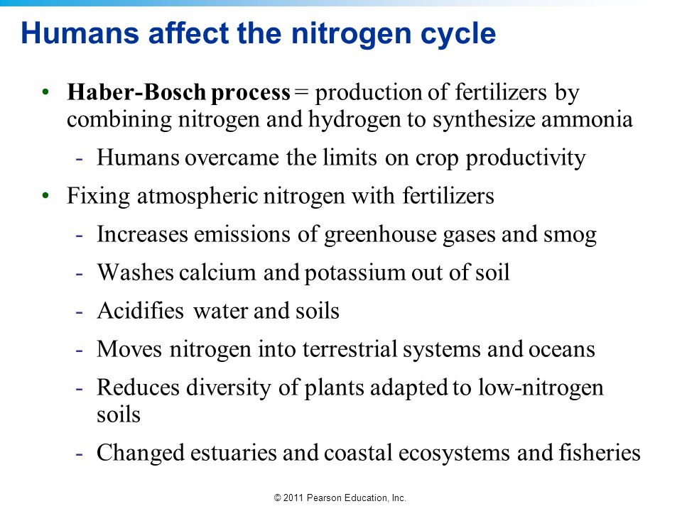 Humans affect the nitrogen cycle