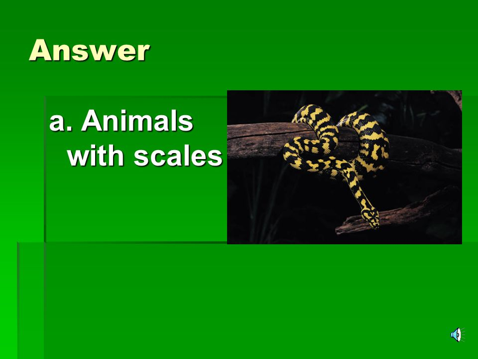 Answer a. Animals with scales