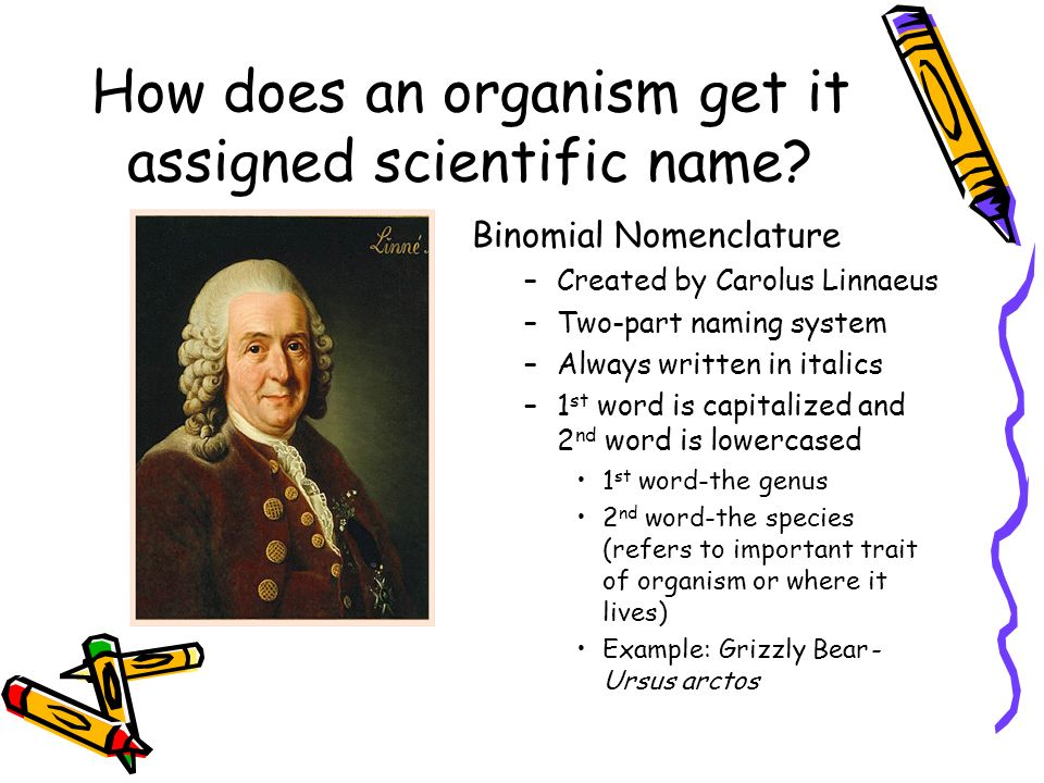 How does an organism get it assigned scientific name