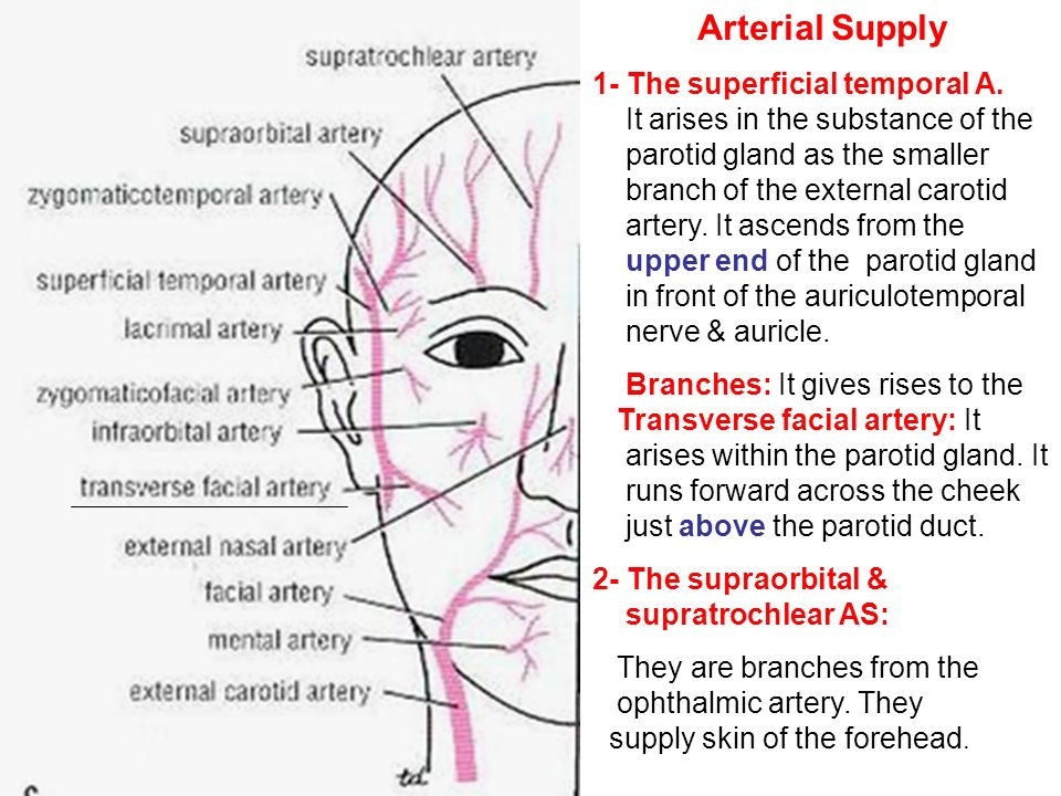 Sensory Nerves of the face - ppt video online download