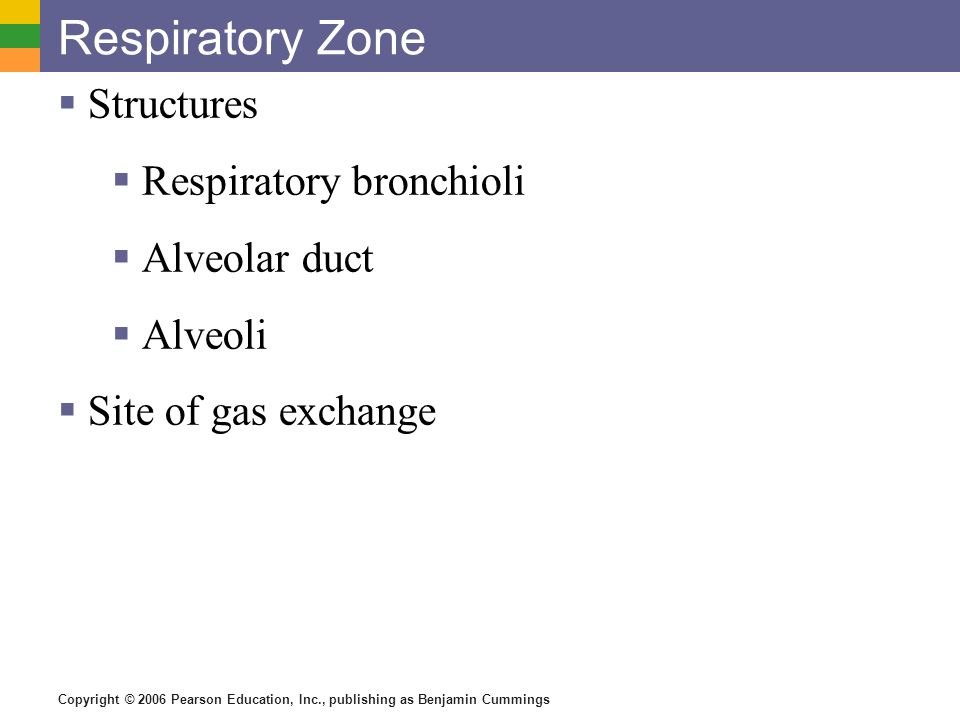 Respiratory Zone Structures Respiratory bronchioli Alveolar duct
