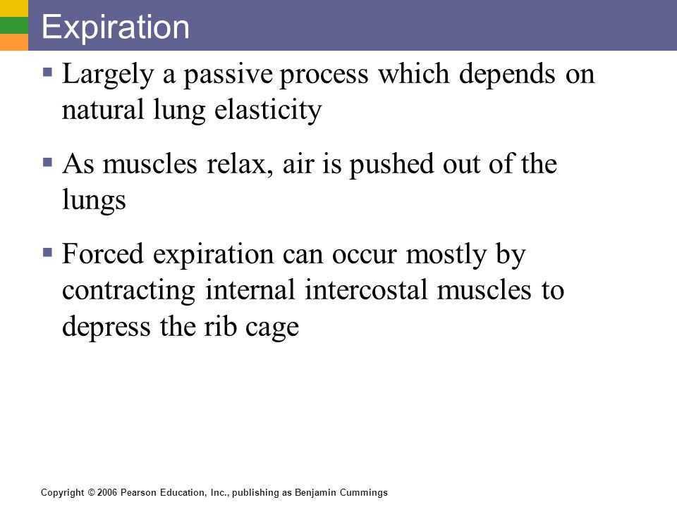 Expiration Largely a passive process which depends on natural lung elasticity. As muscles relax, air is pushed out of the lungs.