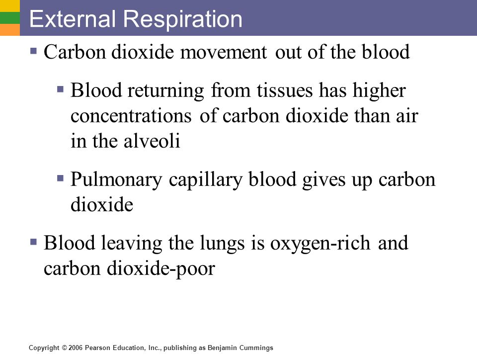 External Respiration Carbon dioxide movement out of the blood