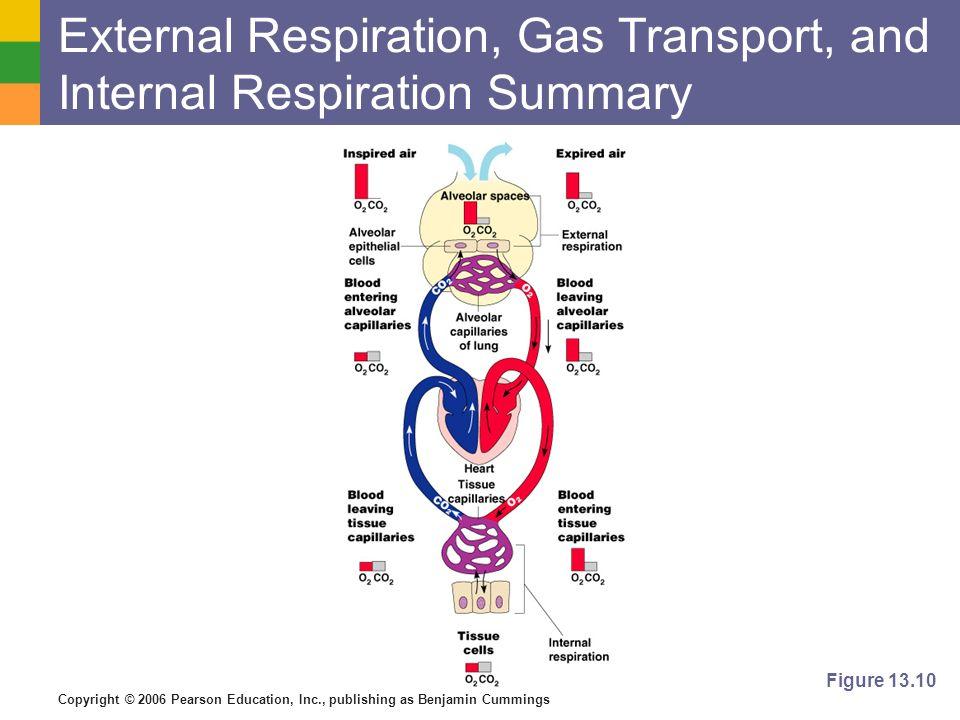 External Respiration, Gas Transport, and Internal Respiration Summary