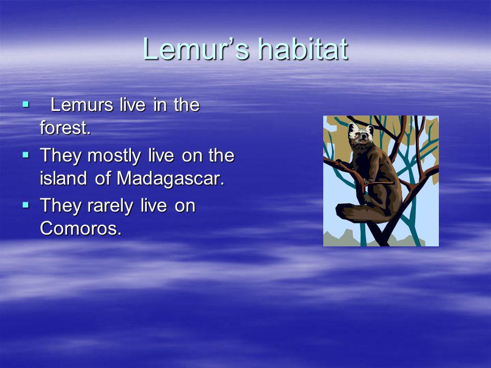 Lemur's habitat Lemurs live in the forest.