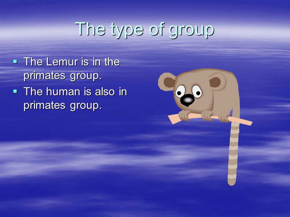 The type of group The Lemur is in the primates group.