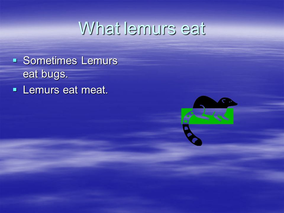What lemurs eat Sometimes Lemurs eat bugs. Lemurs eat meat.