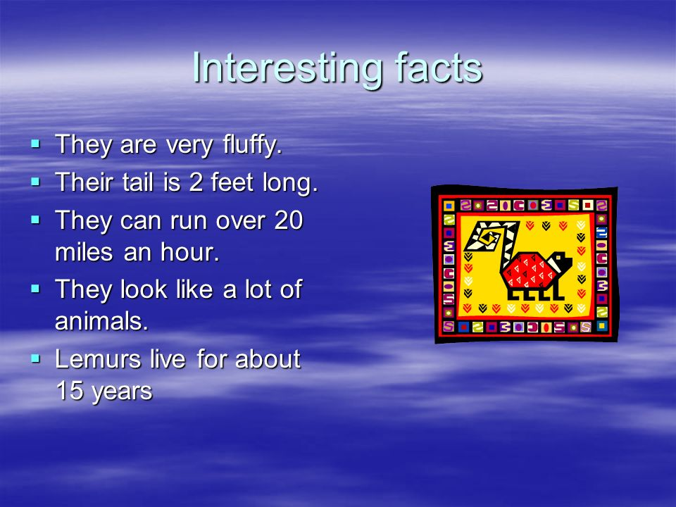 Interesting facts They are very fluffy. Their tail is 2 feet long.