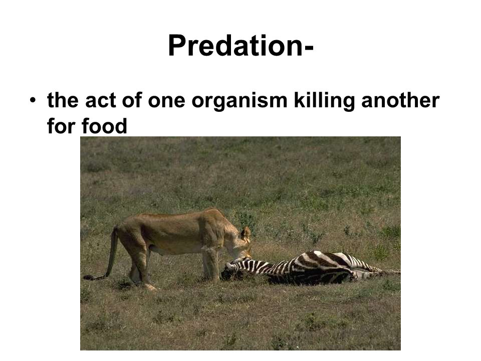 Predation- the act of one organism killing another for food