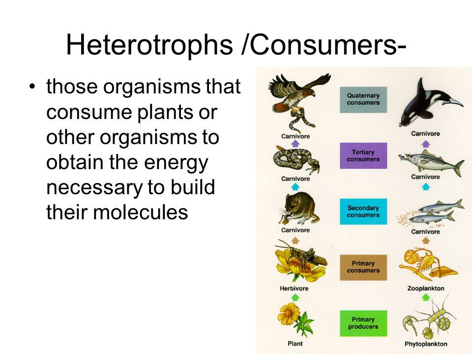 Heterotrophs /Consumers-