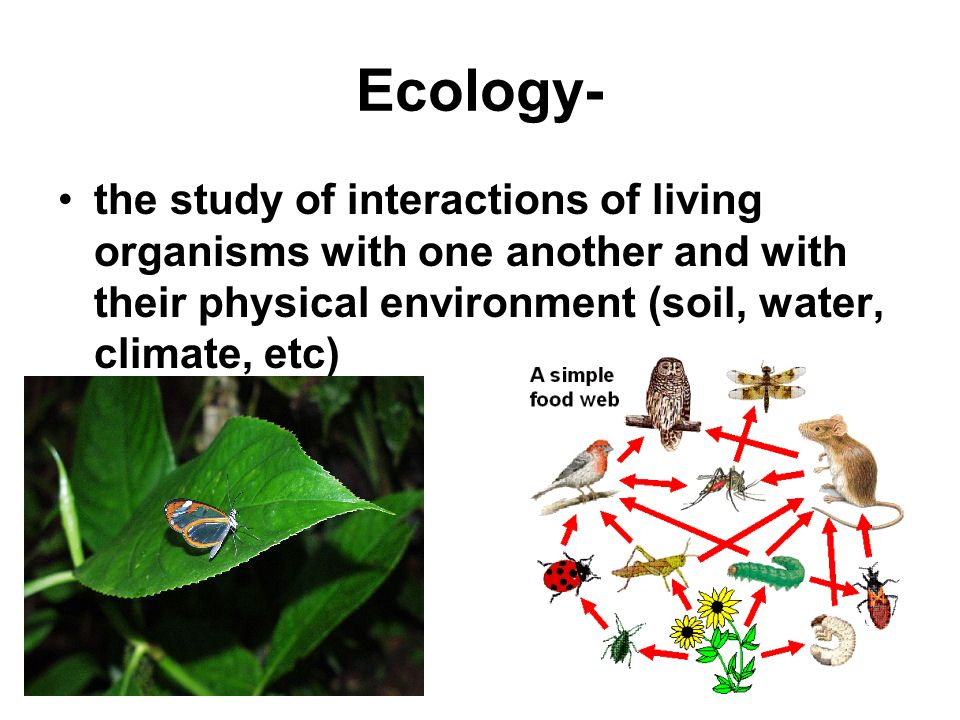 Ecology- the study of interactions of living organisms with one another and with their physical environment (soil, water, climate, etc)