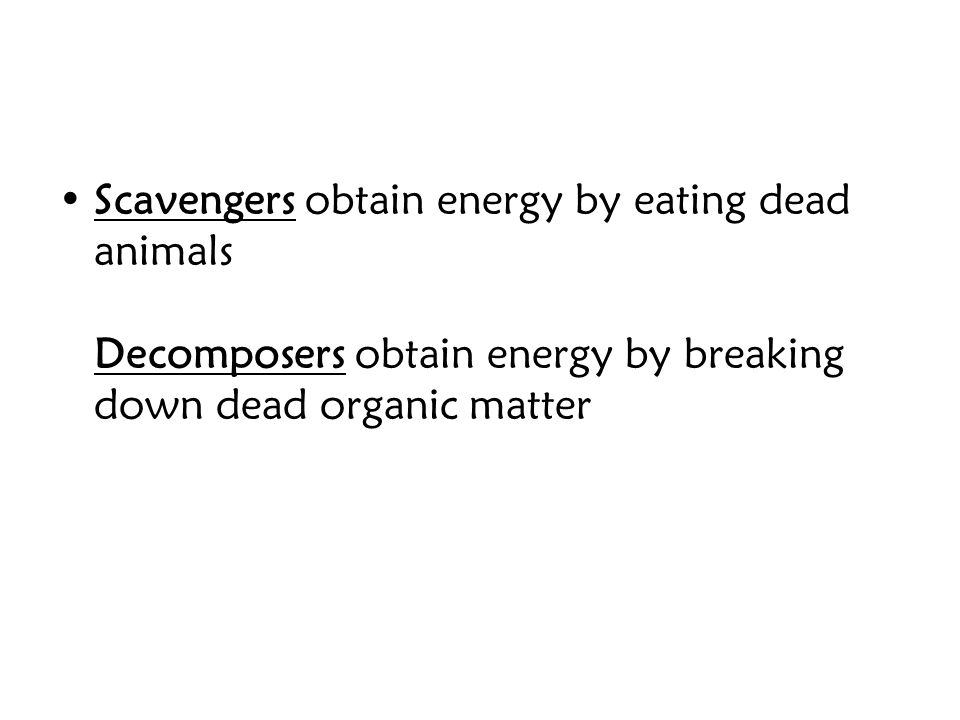 Scavengers obtain energy by eating dead animals Decomposers obtain energy by breaking down dead organic matter