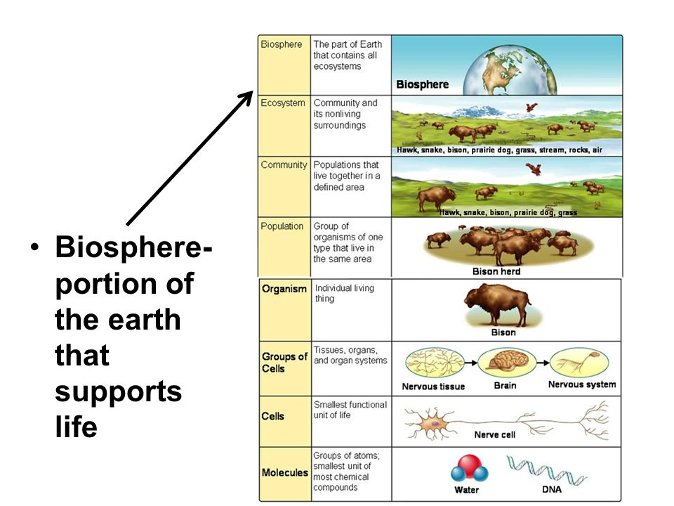 Biosphere- portion of the earth that supports life