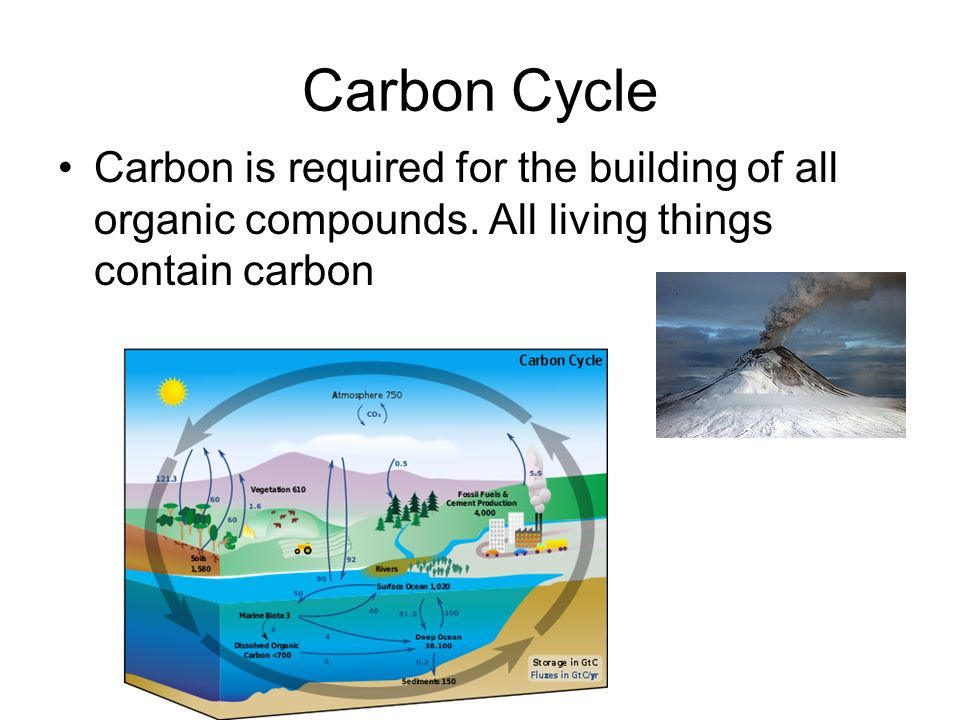 Carbon Cycle Carbon is required for the building of all organic compounds.