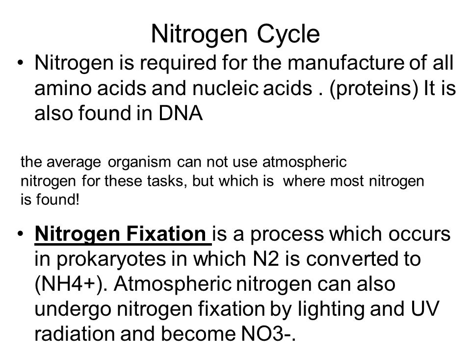 Nitrogen Cycle Nitrogen is required for the manufacture of all amino acids and nucleic acids . (proteins) It is also found in DNA.