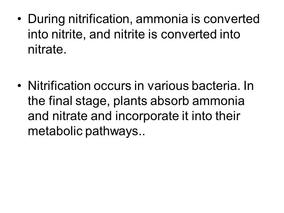 During nitrification, ammonia is converted into nitrite, and nitrite is converted into nitrate.