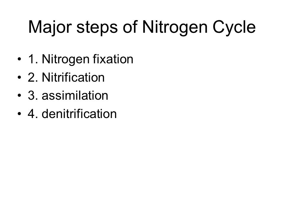Major steps of Nitrogen Cycle