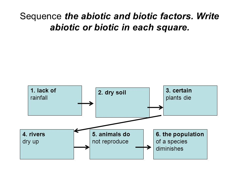 Sequence the abiotic and biotic factors
