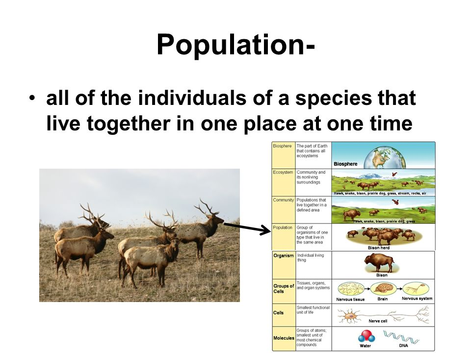 Population- all of the individuals of a species that live together in one place at one time