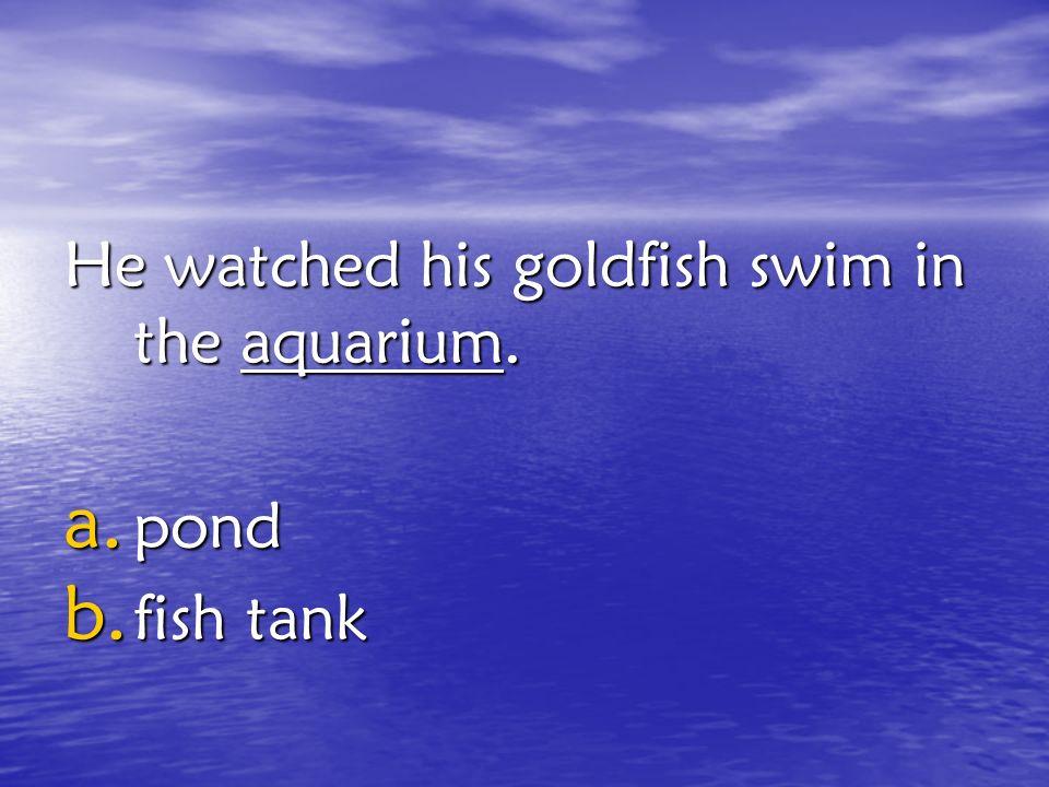 He watched his goldfish swim in the aquarium.