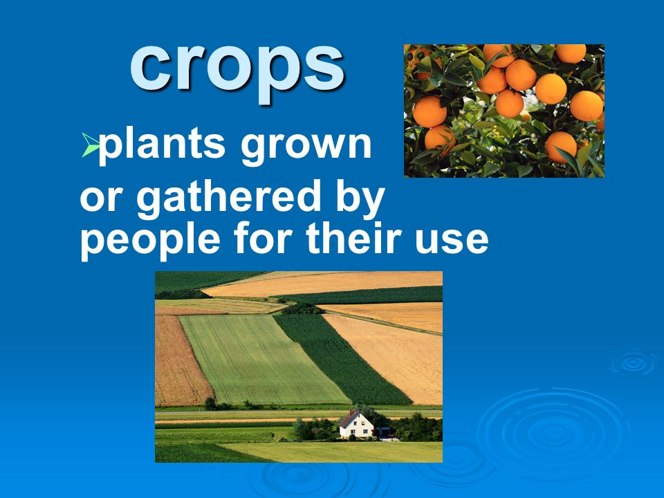 plants grown or gathered by people for their use